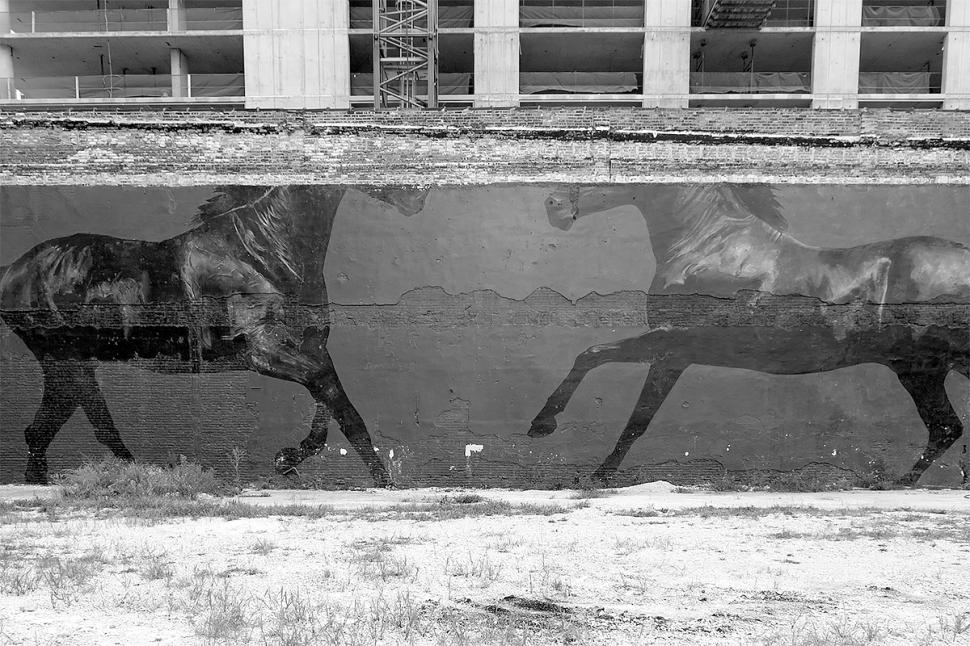 horses_DSCF5209