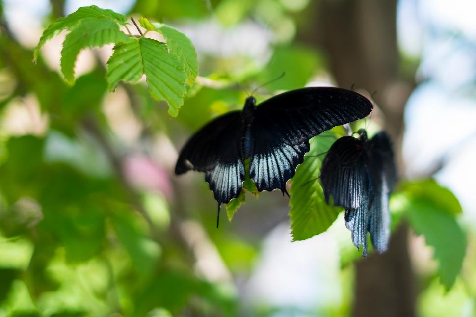 butterfly_DSCF3612